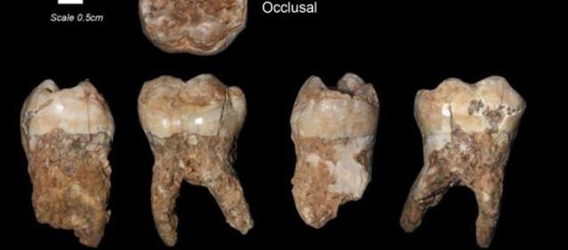 праисторически зъби