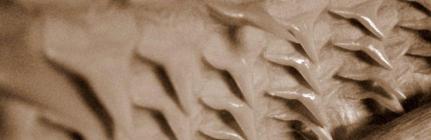 Зъби на акула
